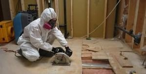 Water Damage and Mold Removal Process